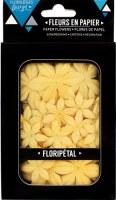 Fleurs Floripetal MIMOSA - Florilèges