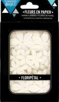 Fleurs Floripetal EDELWEISS - Florilèges