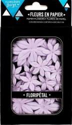 Fleurs Floripetal CAMPANULE - Florilèges