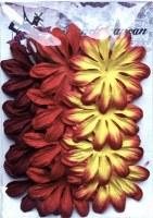 Fleurs LONGS PETALES ROUGE - Ohlala